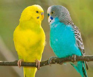 Обои на телефон питомцы, прекрасные, попугаи, животные