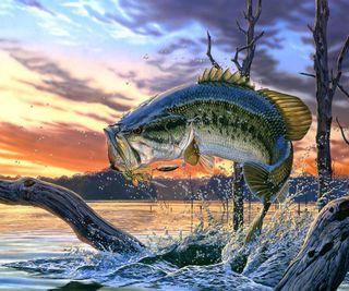 Обои на телефон рыба, океан, пейзаж, море, картина, закат, perch, hd