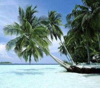 Обои на телефон синие, пляж, пальмы, лето, palms hd