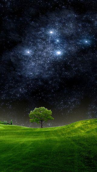 Обои на телефон естественные, приятные, природа, поле, ночь, новый, небо, звезды, дерево, hd