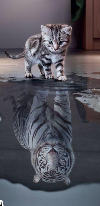 Обои на телефон тигр, ночь, мечта, кошки, котята, коты, вместе, big, good