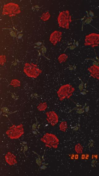 Обои на телефон цветы, цветочные, романтика, ретро, любовь, красные, rosas, fondo