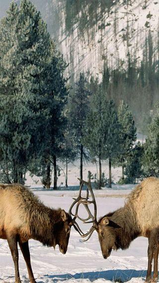 Обои на телефон олень, снег