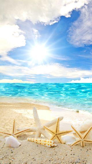 Обои на телефон солнечный свет, тропические, раковина, пляж, песок, море, вода