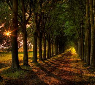 Обои на телефон тень, путь, природа, новый, закат, дерево, hd