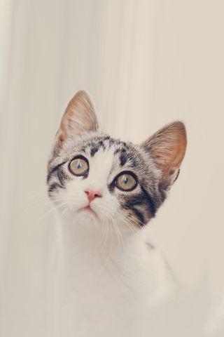 Обои на телефон мягкие, фото, спокойствие, приятные, питомцы, милые, кошки, котята, глаза, hd, gaze, cutest cat