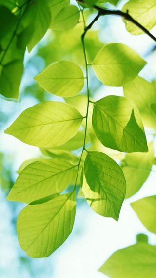 Обои на телефон макро, фотография, природа, листья, зеленые, ветка