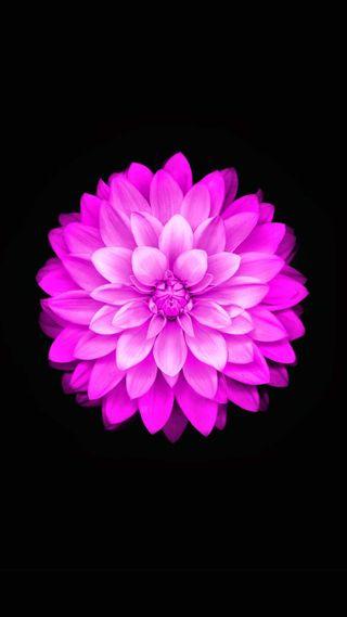 Обои на телефон изображения, цветные, розовые, лотус, pink color, pin, lotusleast images, lotus 6, least images