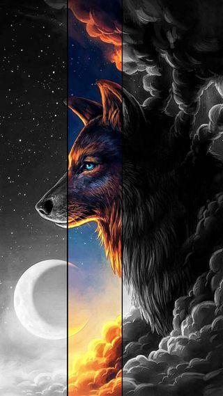 Обои на телефон черные, прекрасные, волк, black wolf, beautiful wolf
