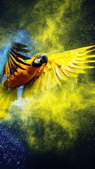 Обои на телефон попугай, цветные, птицы, летать, macaw