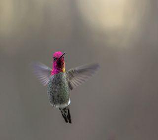 Обои на телефон летать, птицы, humming, hd
