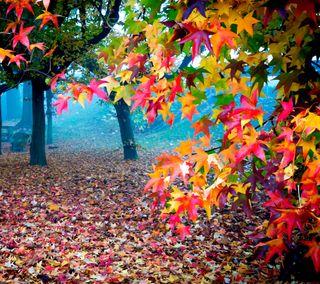 Обои на телефон осень, цветные, природа, красочные, autumn colors