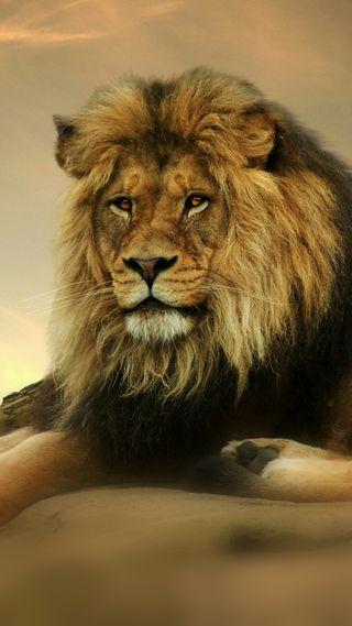 Обои на телефон лев, король, животные, дикие, 1080p