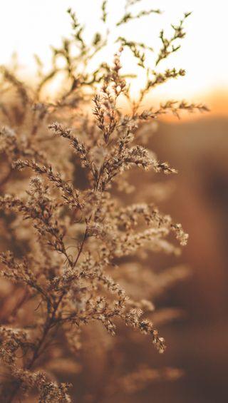 Обои на телефон трава, свет, природа, на улице, reed