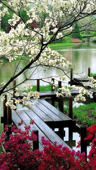 Обои на телефон сад, цветы, растения, мост, дерево, bridge to garden