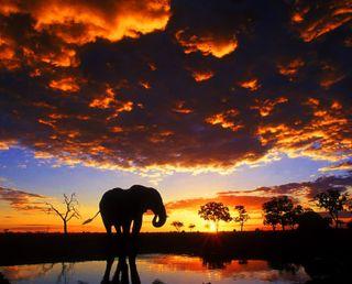 Обои на телефон слон, природа, закат