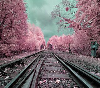 Обои на телефон розовые, путь, приятные, природа