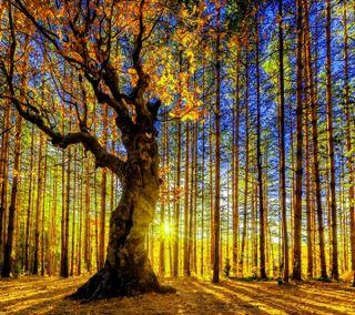 Обои на телефон солнце, солнечный свет, природа, пейзаж, новый, лес, естественные, деревья