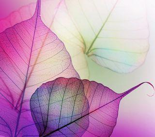Обои на телефон растения, листья, xray