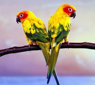 Обои на телефон попугай, цветные, фото, природа, пейзаж, parrot pair