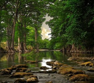 Обои на телефон естественные, природа, пейзаж, озеро, дерево, вода