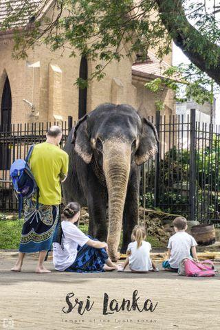 Обои на телефон шри, слоны, слон, ланка, арт, sri lankan elephant, kandy, art