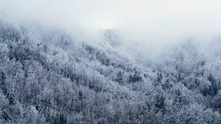 Обои на телефон фото, снег, природа, прекрасные, деревья, snow trees