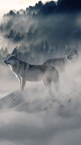 Обои на телефон туман, лес, волк