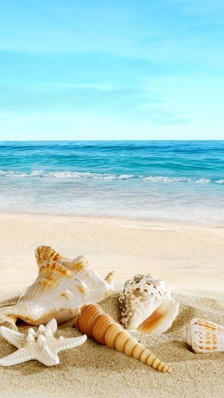 Обои на телефон песок, тропические, раковина, природа, пляж, море, вода