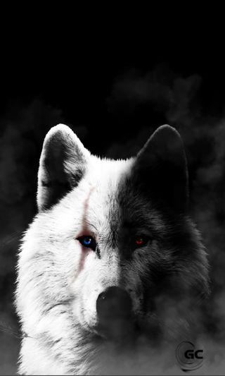 Обои на телефон черные, туман, ночь, животные, дикие, волк, белые, wounded wolf, wild animals, black and white wolf