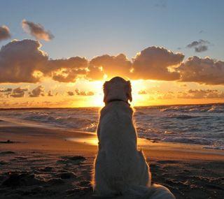 Обои на телефон часы, собаки, пляж, закат