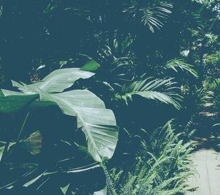 Обои на телефон флора, джунгли, природа, листья, лес, зеленые, leaves of ferns