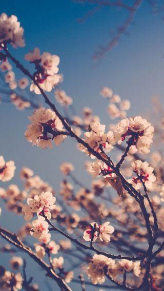Обои на телефон пастельные, цветы, милые, primavera, hd, arbol