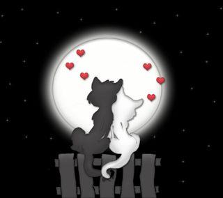 Обои на телефон коты, любовь, love cats