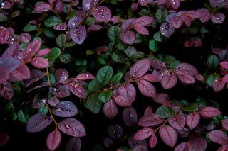 Обои на телефон растения, цветы, роса, листья, капли, moisture