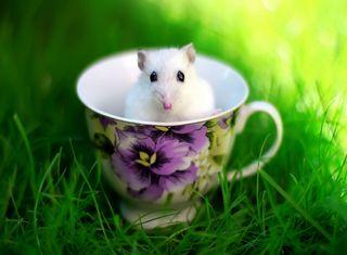 Обои на телефон чашка, маус, rat, cup