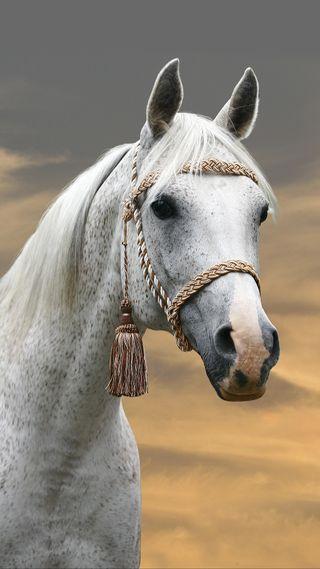 Обои на телефон лошадь, животные, белые