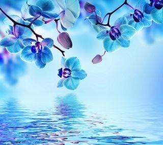 Обои на телефон отражение, цветы, синие, орхидея, вода