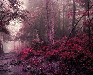 Обои на телефон джунгли, фиолетовые, розовые, природа, листья, лес, деревья, pink nature