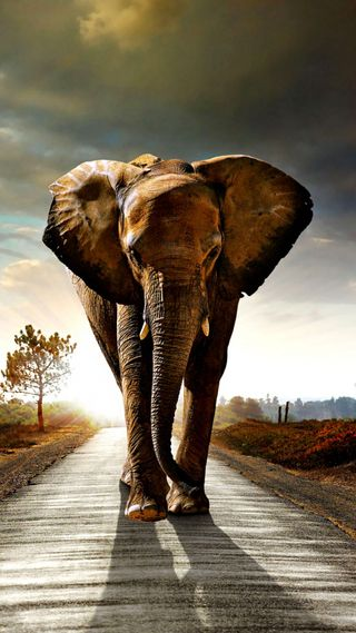 Обои на телефон животные, дорога, облака, слон, ходячие