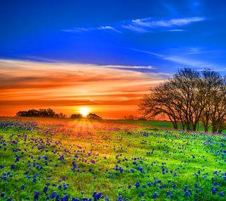 Обои на телефон солнечный свет, цветы, природа, прекрасные, поле, закат, flower field