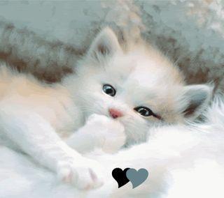 Обои на телефон котята, милые