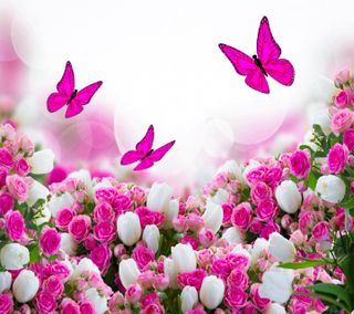 Обои на телефон цветы, приятные, новый