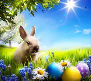 Обои на телефон яйца, пасхальные, цветы, солнечный свет, милые, луг, кролик, время, весна, easter time