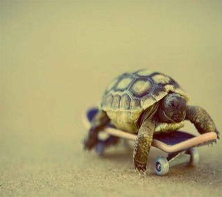 Обои на телефон черепаха, животные, slow