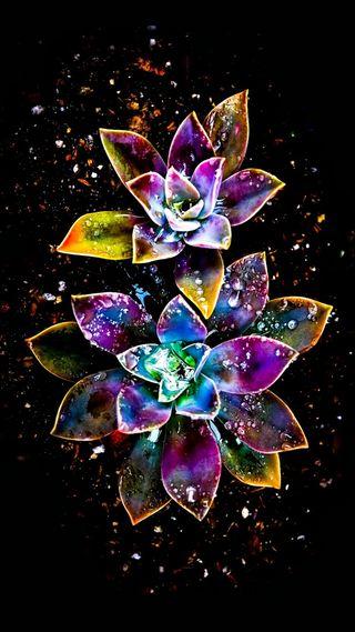 Обои на телефон сверкающие, цветы, природа, красочные, дизайн, абстрактные