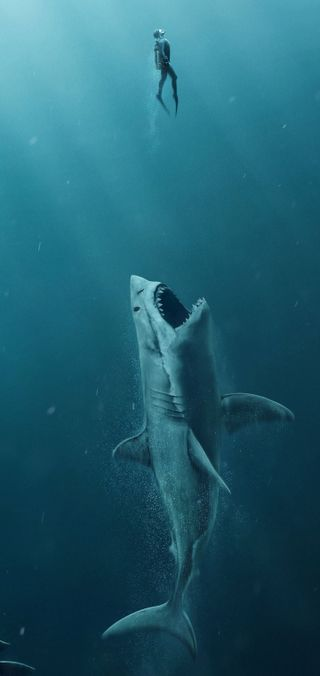 Обои на телефон humour, note 10 plus, забавные, вода, океан, акула, дельфины