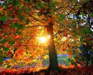 Обои на телефон солнечный свет, природа, парк, осень, листья, дерево, восход, autumn leaves