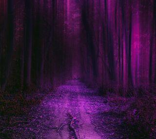 Обои на телефон фиолетовые, приятные, природа, новый, лес, естественные, деревья, hd