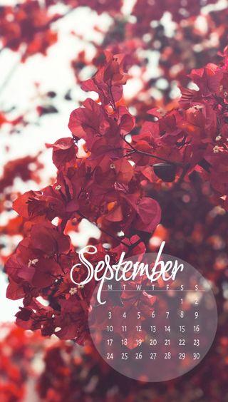 Обои на телефон zcalsep18, blossoms sep, календарь, расцветает, сентябрь